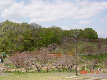 平岡公園(春) 003.jpg